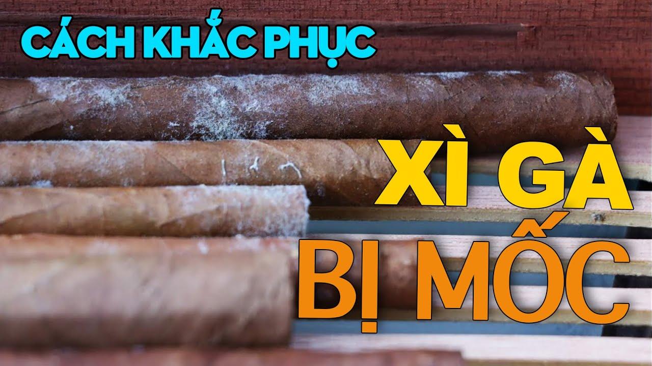 cach-khac-phuc-thuoc-cigar-bi-moc